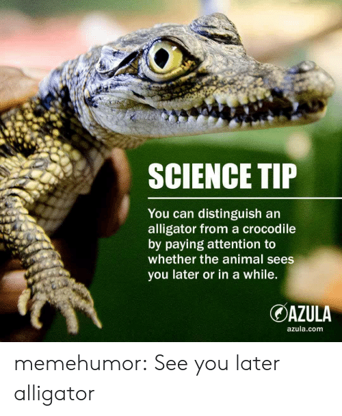 Tumblr, Alligator, and Animal: SCIENCE TIP  You can distinguish an  alligator from a crocodile  by paying attention to  whether the animal sees  you later or in a while  OAZULA  azula.com memehumor:  See you later alligator