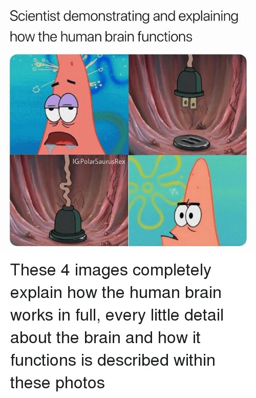 Memes, Brain, and Images: Scientist demonstrating and explaining  how the human brain functions  IG:PolarSaurusRex These 4 images completely explain how the human brain works in full, every little detail about the brain and how it functions is described within these photos