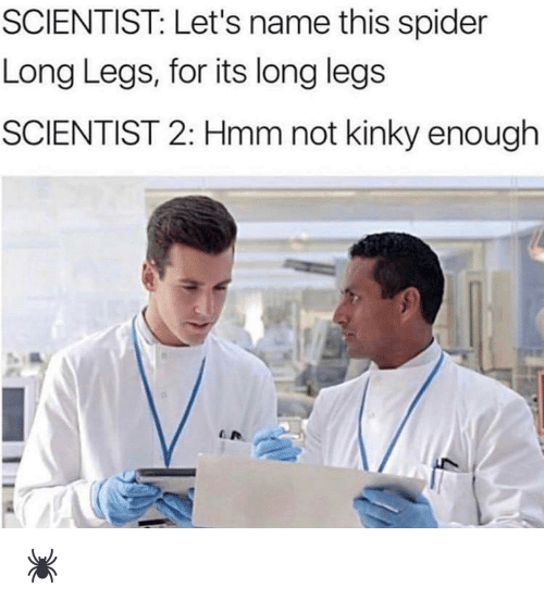 Spider, Dank Memes, and Name: SCIENTIST: Let's name this spider  Long Legs, for its long legs  SCIENTIST 2: Hmm not kinky enough 🕷