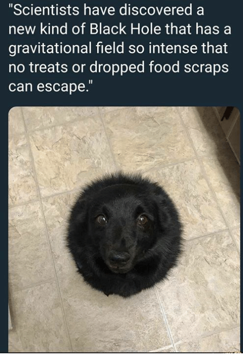 "Food, Memes, and Black: ""Scientists have discovered a  new kind of Black Hole that has a  gravitational field so intense that  no treats or dropped food scraps  can escape."