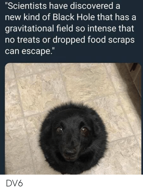 Food, Memes, and Black: Scientists have discovered a  new kind of Black Hole that has a  gravitational field so intense that  no treats or dropped food scraps  can escape. DV6