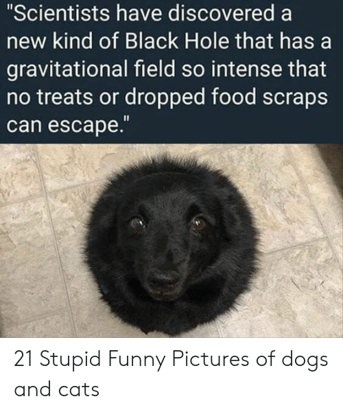 """Cats, Dogs, and Food: """"Scientists have discovered a  new kind of Black Hole that has a  gravitational field so intense that  no treats or dropped food scraps  can escape 21 Stupid Funny Pictures of dogs and cats"""