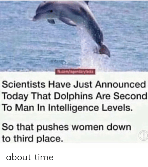 Funny, Dolphins, and Time: Scientists Have Just Announced  Today That Dolphins Are Second  To Man In Intelligence Levels.  So that pushes women down  to third place. about time