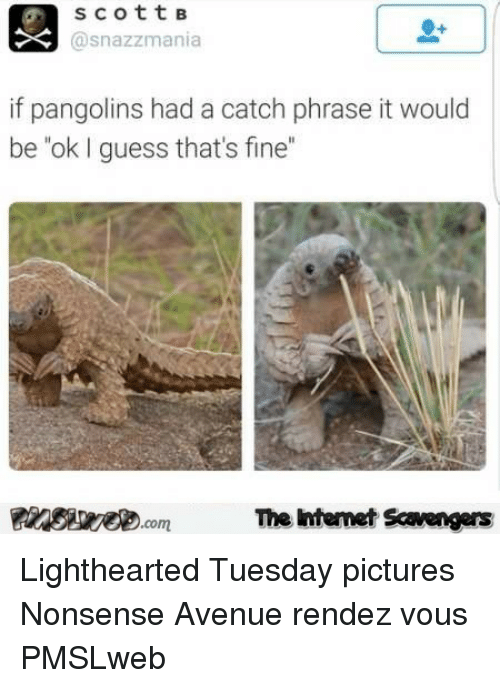 scottB Asnazzmania if Pangolins Had a Catch Phrase It Would Beok I