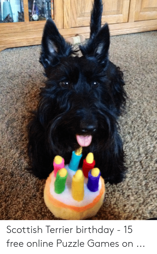 Scottish Terrier Birthday 15 Free Online Puzzle Games On