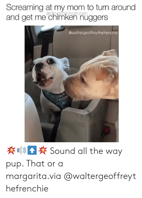 Instagram, Target, and Mom: Screaming at my mom to turn around  and get me chimken nüggers  @doasbgingbasic  @waltergeoffreythefrenchie 💥🔊⬆️💥 Sound all the way pup. That or a margarita.via @waltergeoffreythefrenchie
