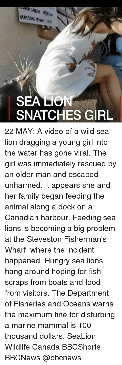 Anaconda, Family, and Food: SEA LO  SNATCHES GIRL 22 MAY: A video of a wild sea lion dragging a young girl into the water has gone viral. The girl was immediately rescued by an older man and escaped unharmed. It appears she and her family began feeding the animal along a dock on a Canadian harbour. Feeding sea lions is becoming a big problem at the Steveston Fisherman's Wharf, where the incident happened. Hungry sea lions hang around hoping for fish scraps from boats and food from visitors. The Department of Fisheries and Oceans warns the maximum fine for disturbing a marine mammal is 100 thousand dollars. SeaLion Wildlife Canada BBCShorts BBCNews @bbcnews