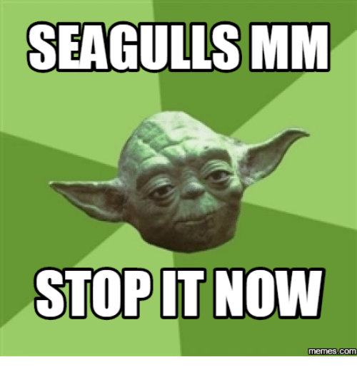 Stop It, Seagull, and Seagulls: SEAGULLS MM  STOP IT NOW  Memes  com