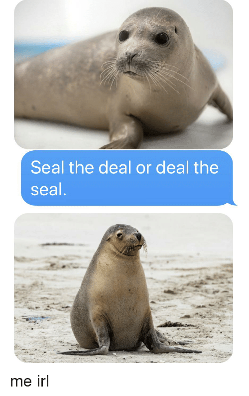 Seal, Irl, and Me IRL: Seal the deal or deal the  seal
