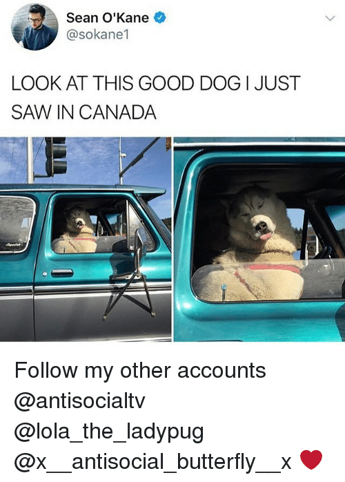 Memes, Saw, and Butterfly: Sean O'Kane  @sokane1  LOOK AT THIS GOOD DOG I JUST  SAW IN CANADA Follow my other accounts @antisocialtv @lola_the_ladypug @x__antisocial_butterfly__x ❤️