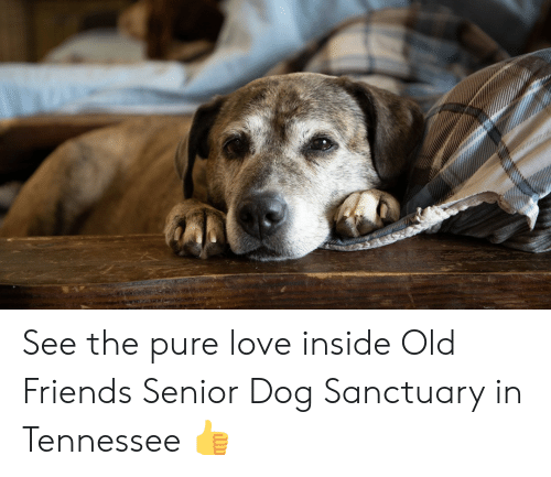 Friends, Love, and Memes: See the pure love inside Old Friends Senior Dog Sanctuary in Tennessee 👍