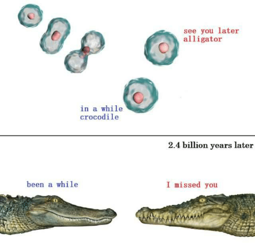 Alligator, Been, and Crocodile: see you later  alligator  in a while  crocodile  2.4 billion years later  I missed you  been a while