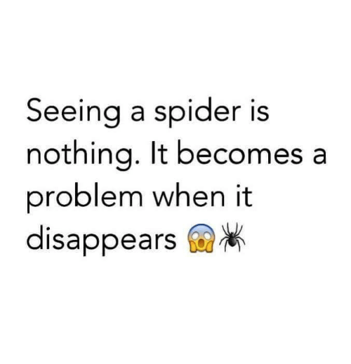 Memes, Spider, and Spiders: Seeing a spider is  nothina, It becomes a  problem when it  disappears