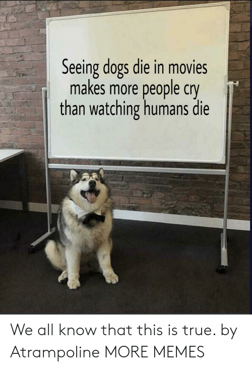 Dank, Dogs, and Memes: Seeing dogs die in movies  makes more people cry  than watching humans die We all know that this is true. by Atrampoline MORE MEMES