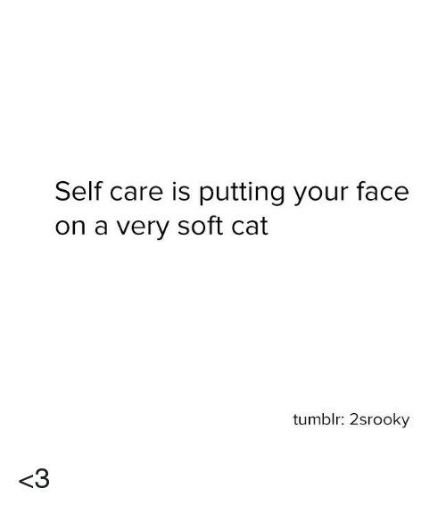 Memes, Tumblr, and 🤖: Self care is putting your face  on a very soft cat  tumblr: 2srooky <3