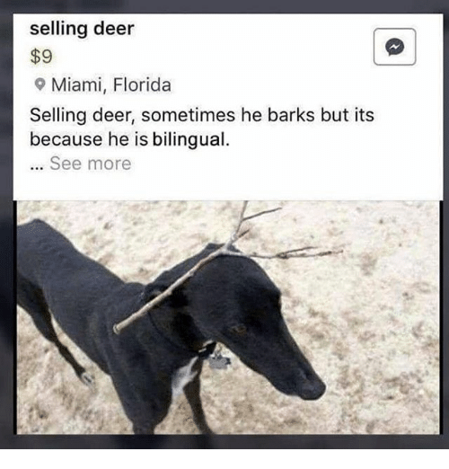 Deer, Florida, and Dank Memes: selling deer  $9  9 Miami, Florida  Selling deer, sometimes he barks but its  because he is bilingual  See more