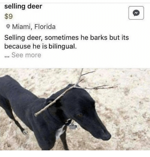 Deer, Florida, and Miami: selling deer  $9  9 Miami, Florida  Selling deer, sometimes he barks but its  because he is bilingual.  .. See more