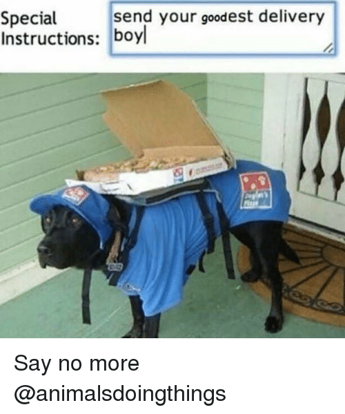 Say No More, Dank Memes, and More: send your goodest delivery  Special  Instructions: boyl Say no more @animalsdoingthings