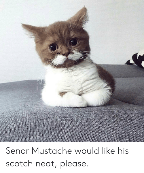 Duck Duck Goose Blood And Wine Languageen: Senor Mustache Would Like His Scotch Neat Please