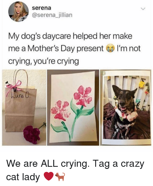 Crazy, Crying, and Dogs: serena  @serena jillian  My dog's daycare helped her make  me a Mother's Day present I'm not  crying, you're crying  una We are ALL crying. Tag a crazy cat lady ❤️🐈