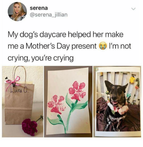 Crying, Dogs, and Mother's Day: serena  @serena_jillian  My dog's daycare helped her make  me a Mother's Day present I'm not  crying, you're crying  una