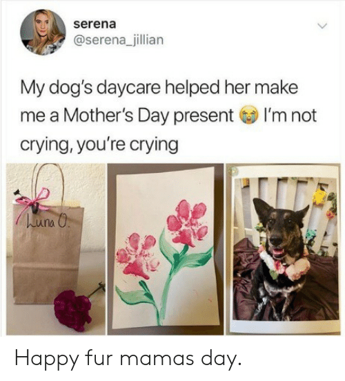 Crying, Dogs, and Mother's Day: serena  @serena_jillian  My dog's daycare helped her make  me a I'm not  crying, you're crying  Mother's Day present  una Happy fur mamas day.