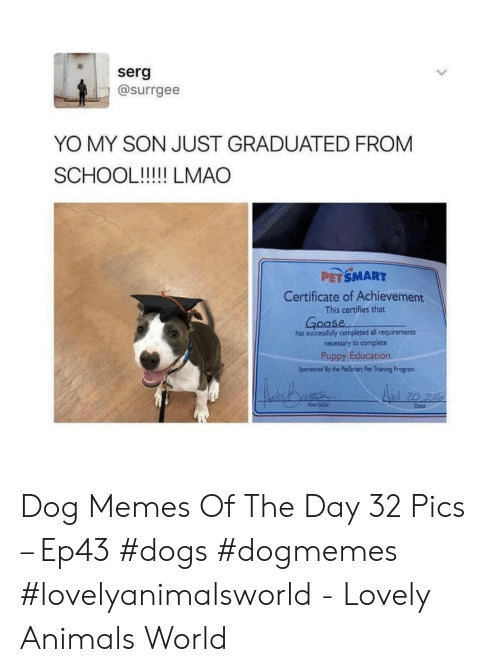 Animals, Dogs, and Memes: serg  @surrgee  YO MY SON JUST GRADUATED FROM  PETSMART  Certificate of Achievement  This certifies that  oase  has successfully completed all requirements  necessary to complete  Puppy Education  Sponsored By the PecSmart Pet Training Program  l20 2l  Date Dog Memes Of The Day 32 Pics – Ep43 #dogs #dogmemes #lovelyanimalsworld - Lovely Animals World