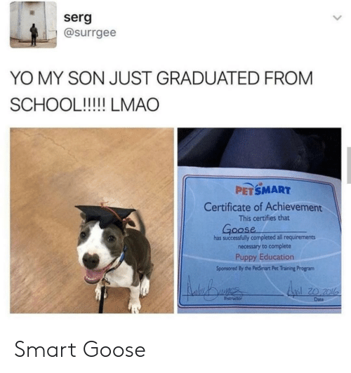 Lmao, School, and Yo: serg  @surrgee  YO MY SON JUST GRADUATED FROM  SCHOOL!!!!! LMAO  PETSMART  Certificate of Achievement  This certifies that  Goose  has successfully completed all requirements  necessary to complete  Puppy Education  Sponsored By the PetSmart Pet Training Program  Anil 20 201  Instructor  Date Smart Goose