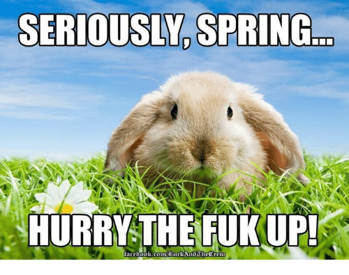 SERIOUSLY SPRING HURRY THE FUK UP | Meme on me.me