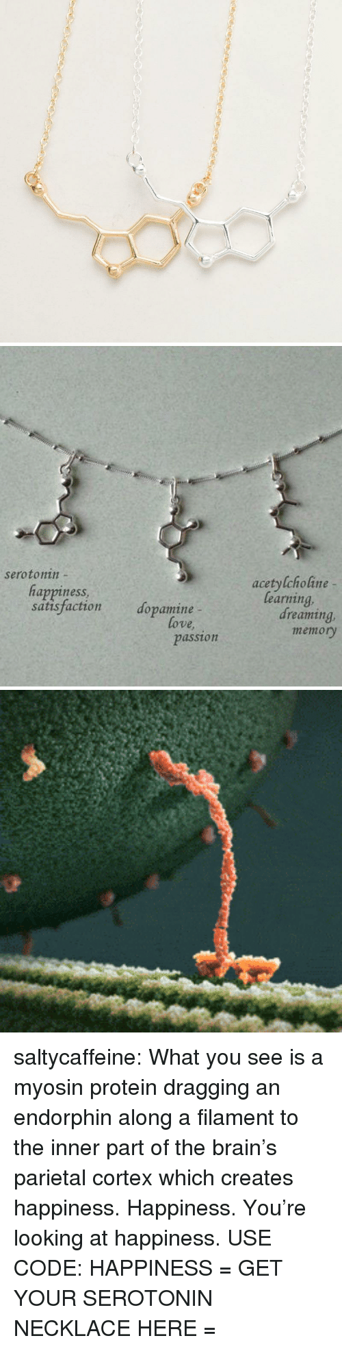 Protein, Tumblr, and Blog: serotonin  acetylcholine -  happinesS  satisfaction dopamine  learning  dreaming  ove  memory  passion saltycaffeine: What you see is a myosin protein dragging an endorphin along a filament to the inner part of the brain's parietal cortex which creates happiness. Happiness. You're looking at happiness. USE CODE: HAPPINESS = GET YOUR SEROTONIN NECKLACE HERE =