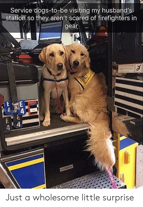 Dogs, Wholesome, and Service: Service dogs-to-be visiting my husband's  station so they aren't scared of firefighters in  gear Just a wholesome little surprise