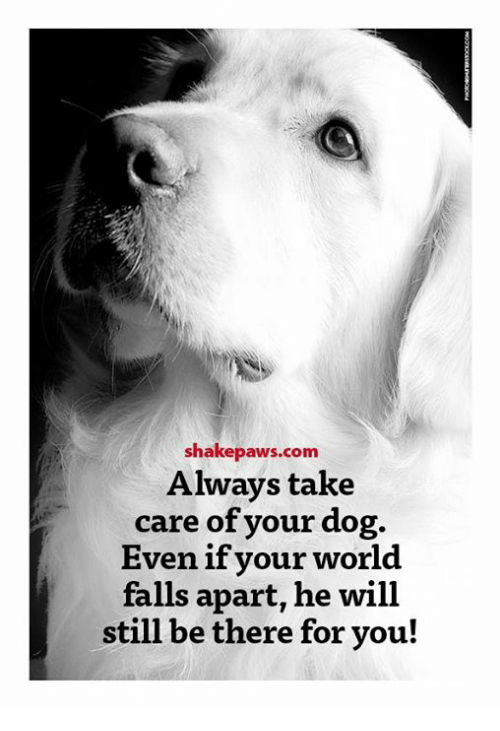 Shake Paws Com Always Take Care of Your Dog Even if Your