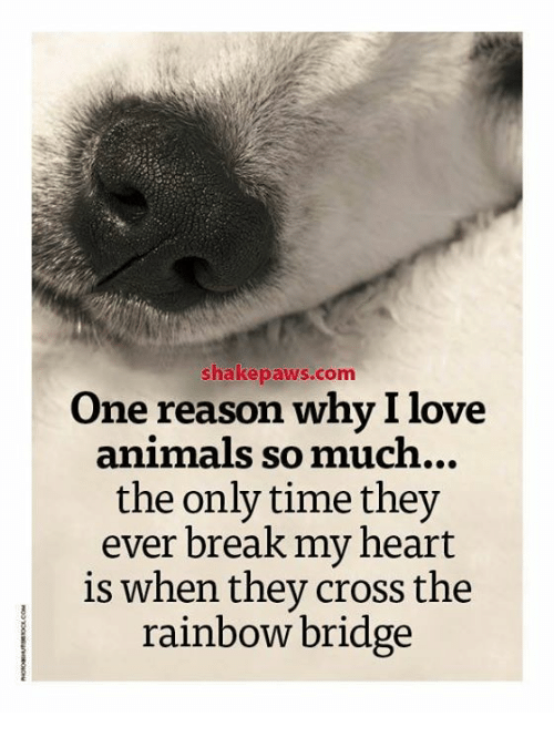 reasons why we love animals There are many reasons to love australia from the stunning beaches and islands to the strange and unique animals here are top 5 reasons we love  can guess why.