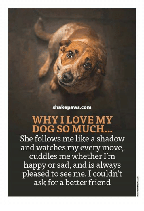 why i love my dog How to love your dog why does my dog bark and spin in circles when we use the vacuum cleaner or open trash bags until we put them away wikihow contributor.