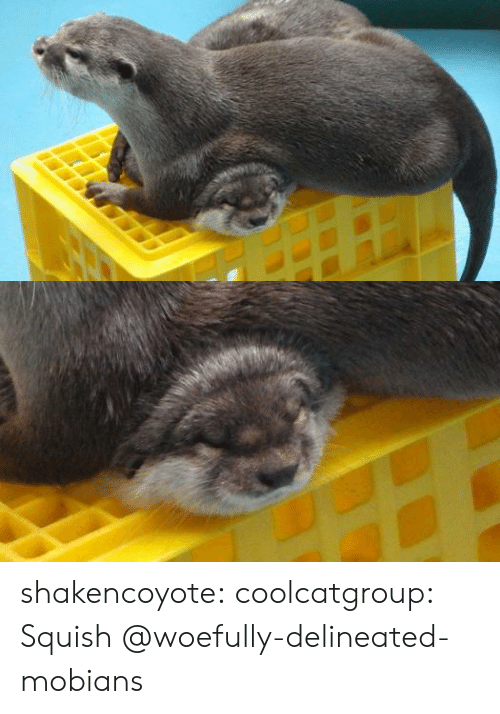 Tumblr, Blog, and Com: shakencoyote: coolcatgroup: Squish @woefully-delineated-mobians