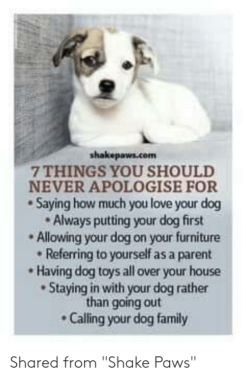 "Family, Love, and Memes: shakepaws.com  7 THINGS YOU SHOULD  NEVER APOLOGISE FOR  Saying how much you love your dog  Always putting your dog first  Allowing your dog on your furniture  Referring to yourself as a parent  Having dog toys all over your house  Staying in with your dog rather  than going out  Calling your dog family Shared from ""Shake Paws"""