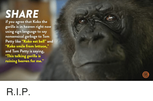 "Dank, Heaven, and Petty: SHARE  if you agree that Koko the  gorilla is in heaven right now  using sign language to say  nonsensical garbage to Tom  Petty like ""Koko eat ball"" and  ""Koko smile from lettuce,""  and Tom Petty is saying,  ""This talking gorilla is  ruining heaven for me."" R.I.P."