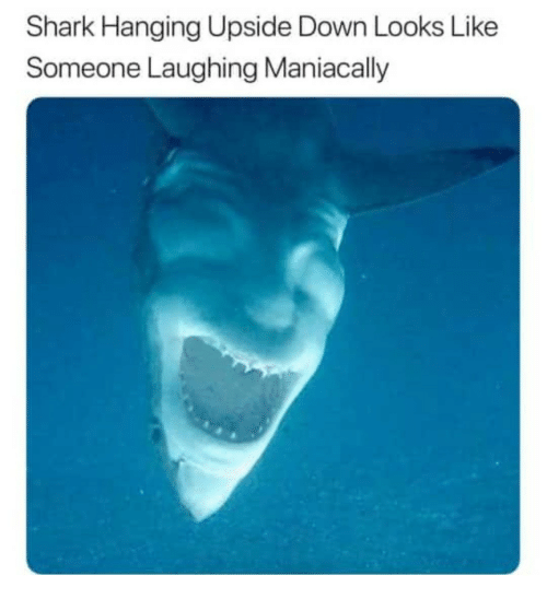 Shark, Down, and Laughing: Shark Hanging Upside Down Looks Like  Someone Laughing Maniacally