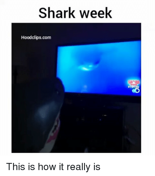 Funny, Shark, and Sharks: Shark week  Hood clips.com This is how it really is