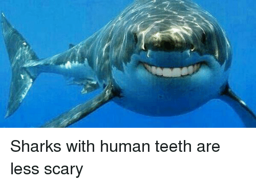 Great white sharks jaw weakness revealed