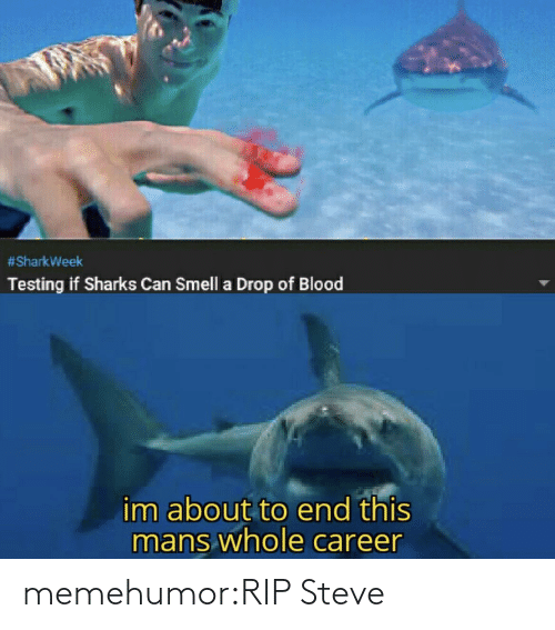 Smell, Tumblr, and Blog:  #SharkWeek  Testing if Sharks Can Smell a Drop of Blood  im about to end this  mans whole career memehumor:RIP Steve