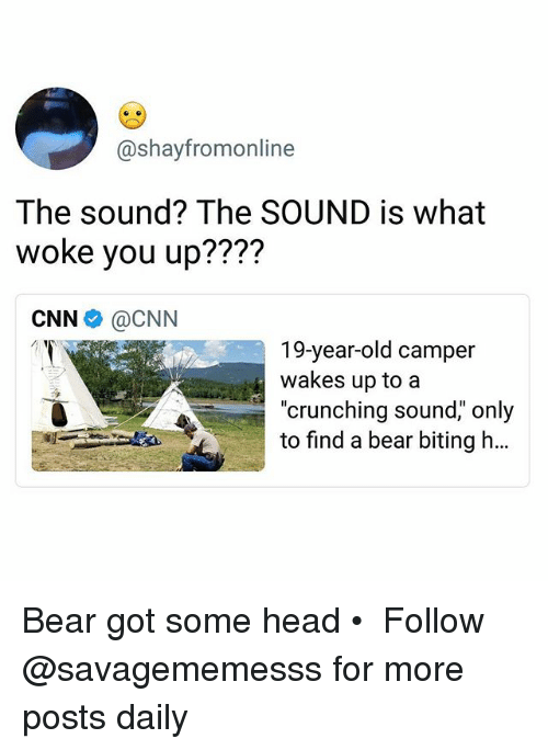 """cnn.com, Head, and Memes: @shayfromonline  The sound? The SOUND is what  woke you up????  CNN e》 @CNN  19-year-old camper  wakes up to a  """"crunching sound,"""" only  to find a bear biting h… Bear got some head • ➫➫ Follow @savagememesss for more posts daily"""