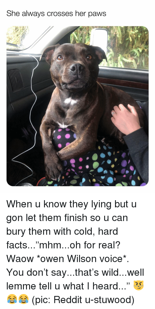 "Facts, Memes, and Reddit: She always crosses her paws When u know they lying but u gon let them finish so u can bury them with cold, hard facts...""mhm...oh for real? Waow *owen Wilson voice*. You don't say...that's wild...well lemme tell u what I heard..."" 😼😂😂 (pic: Reddit u-stuwood)"