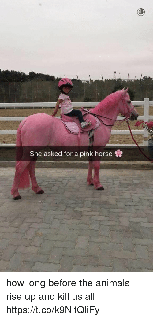 Animals, Horse, and Pink: She asked for a pink horse how long before the animals rise up and kill us all https://t.co/k9NitQliFy