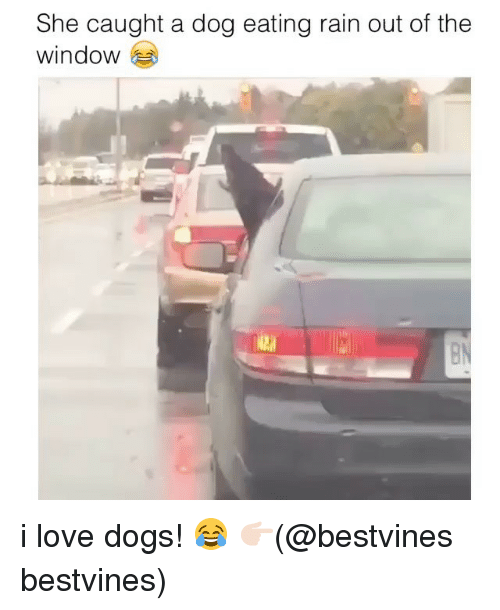 Dogs, Love, and Memes: She caught a dog eating rain out of the  window i love dogs! 😂 👉🏻(@bestvines bestvines)
