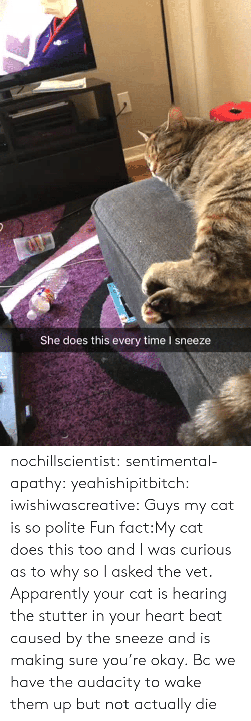 Apparently, Gif, and Target: She does this every time I sneeze nochillscientist:  sentimental-apathy:  yeahishipitbitch:  iwishiwascreative: Guys my cat is so polite  Fun fact:My cat does this too and I was curious as to why so I asked the vet. Apparently your cat is hearing the stutter in your heart beat caused by the sneeze and is making sure you're okay.     Bc we have the audacity to wake them up but not actually die
