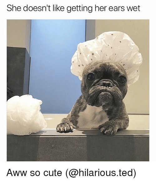 Aww, Cute, and Funny: She doesn't like getting her ears wet Aww so cute (@hilarious.ted)