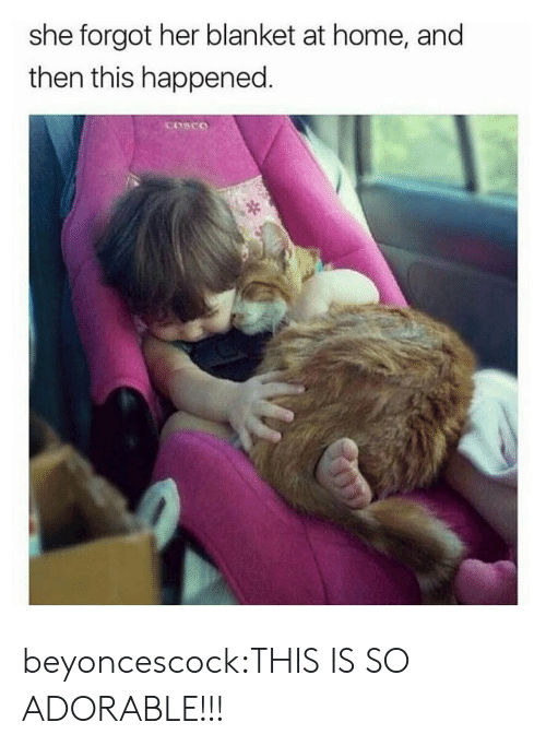 Tumblr, Blog, and Home: she forgot her blanket at home, and  then this happened beyoncescock:THIS IS SO ADORABLE!!!