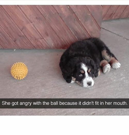 Memes, Angry, and 🤖: She got angry with the ball because it didn't fit in her mouth
