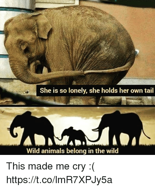 Animals, Wild, and Her: She is so lonely, she holds her own tail  Wild animals belong in the wild This made me cry :( https://t.co/lmR7XPJy5a